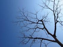 Leafless takken met blauwe hemel Stock Foto's
