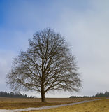 Leafless tree. A photography of a leafless tree in germany stock photography
