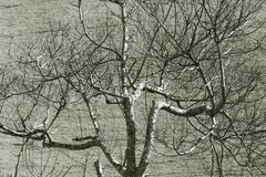 Leafless tree against the contrasted of soil Royalty Free Stock Photos