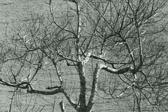 Leafless tree against the contrasted of soil Stock Image