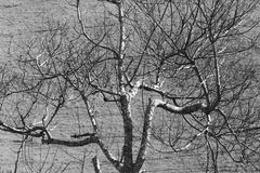 Leafless tree against the contrasted of soil Royalty Free Stock Photography