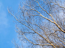 Leafless Tree. Autumn landscape: leafless tree against the blue sky stock images