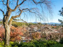 Leafless tree in autumn in Kyoto, Japan. Leafless tree in autumn season with town view below, view from hill in Arashiyama region in Kyoto, Japan Royalty Free Stock Photos