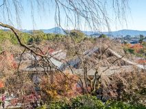 Leafless tree in autumn in Kyoto, Japan. Leafless tree in autumn season with town view below, view from hill in Arashiyama region in Kyoto, Japan Royalty Free Stock Photo