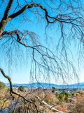 Leafless tree in autumn in Kyoto, Japan. Leafless tree in autumn season with town view below, view from hill in Arashiyama region in Kyoto, Japan Stock Photos