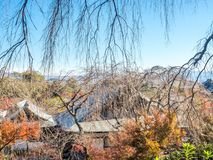 Leafless tree in autumn in Kyoto, Japan. Leafless tree in autumn season with town view below, view from hill in Arashiyama region in Kyoto, Japan Stock Images