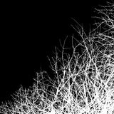 Leafless. Tree background in black and white Stock Photo