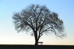 Leafless tree and bench Royalty Free Stock Photography