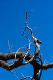 Leafless tree with blue bright sky. At the back stock photo