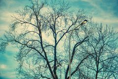 Leafless tree blue sky and city lamp royalty free stock photos
