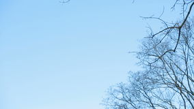 Leafless tree branch against blue sky stock footage