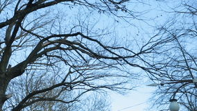 Leafless tree branch against blue sky stock video footage