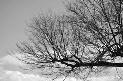 Leafless tree branch in winter, black and white tone. Leafless tree branch against in winter for background, black and white tone royalty free stock photography