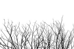 Leafless tree branch, black and white tone background stock photo