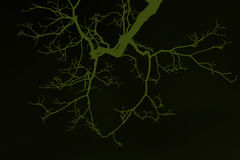 Leafless tree branch Stock Photos