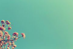 Leafless tree branch with pink flowers against blue sky background, vintage toned image stock photos