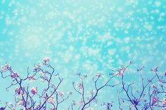 Leafless tree branch with pink flowers against blue sky and snow falling. Royalty Free Stock Images