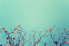 Free Leafless Tree Branch With Pink Flowers Against Blue Sky Background, Vintage Toned Image Stock Photography - 74653832