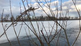 Leafless tree branches against a background of frozen river with a strong current. Melting ice on the river. The arrival of spring stock video footage