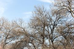Leafless tree branches against the blue sky.  stock photo