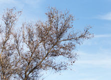 Leafless tree branches against the blue sky.  royalty free stock images