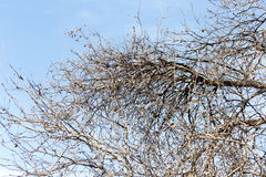 Leafless tree branches against the blue sky.  stock photos