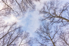 Leafless Tree Branches on Blue Sky Stock Photo