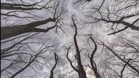 Tree Branches and Cloudy Sky Looking Up Time Lapse. Leafless Tree Branches and Cloudy Sky Looking Up Time Lapse stock video footage
