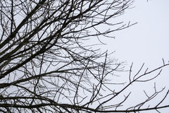 Leafless Tree Branches Stock Images