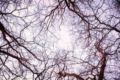 Leafless tree branches background. Leafless tree branches nature background royalty free stock photography