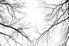 Leafless tree branches on a pale white background Stock Images