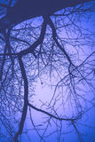 Leafless Tree Branches Retro Stock Image