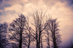 Leafless Tree Branches Retro Royalty Free Stock Photography