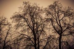 Leafless Tree Branches Retro Stock Photos