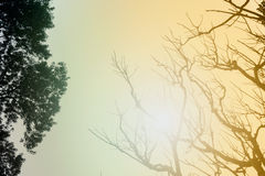 Leafless tree branches in winter season. Leafless tree branches of winter season, season specific image of nature. Image shot against Sun, at Kolkata, Calcutta royalty free stock image