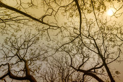 Leafless tree branches in winter season. Leafless tree branches of winter season, season specific image of nature. Image shot against Sun, at Kolkata, Calcutta stock images