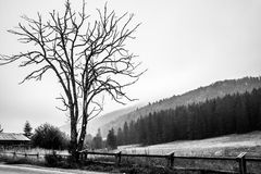 Leafless tree Stock Photography