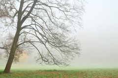 Leafless tree in dense fog in autumn Royalty Free Stock Images