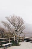 Leafless tree and empty bench on a misty day. Expressing loneliness mood in winter season stock photos