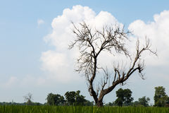 Leafless tree with fluffy clouds. Stock Photo