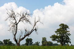Leafless tree with fluffy clouds. Royalty Free Stock Photos