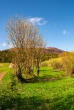 Leafless tree in front of a mountain. Beautiful countryside scenery in springtime Royalty Free Stock Images