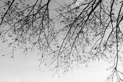 Leafless tree in garden Royalty Free Stock Photos