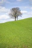 Leafless tree Royalty Free Stock Image