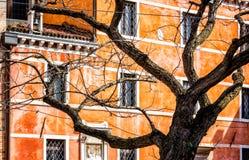 Leafless Tree In Venice, Italy Royalty Free Stock Photos