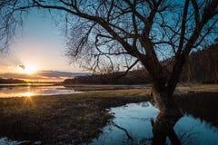 Leafless tree on lake coast at sunset