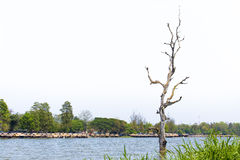 Leafless tree, lake, floating hut, sky. A leafless tress in the middle of the lake in front of floating hut on the opposite side royalty free stock photos