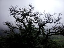 Leafless tree. A leafless tree in Lonavla royalty free stock images
