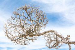 Leafless tree of loneliness Royalty Free Stock Photography
