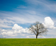 Leafless Tree. Lonely leafless tree on grass field with cloudy sky royalty free stock photos
